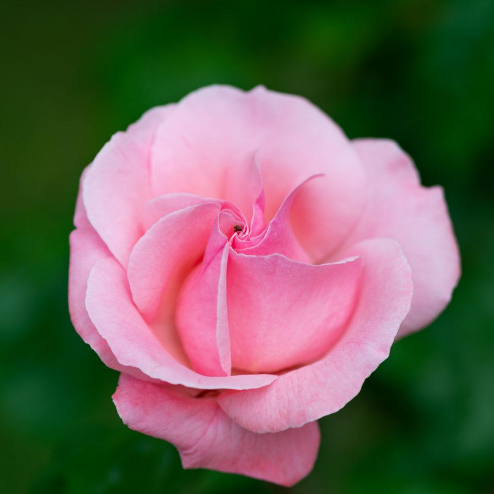 Lucille_Galleli-Floral _2020_4322
