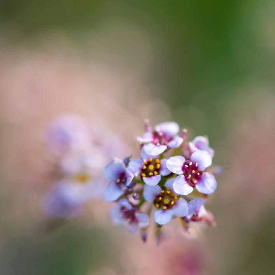 Lucille_Galleli-Floral _2018_2360