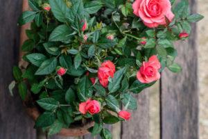 Lucille_Galleli-Floral _2018_7546