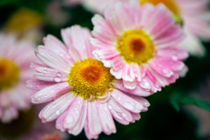 Lucille_Galleli-Floral _2018_8017