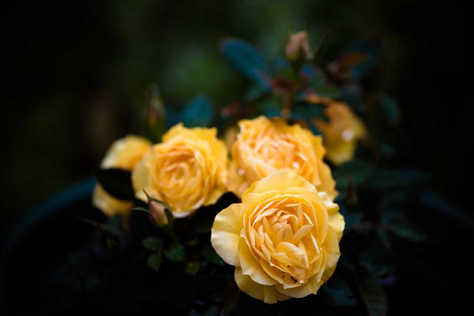 Lucille_Galleli-Floral _2018_8248