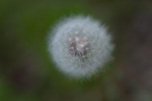 Lucille_Galleli-Floral _2020_-2