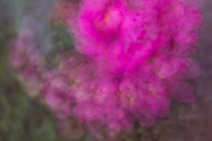 Lucille_Galleli-Floral _2020_0360-2