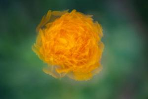 Lucille_Galleli-Floral _2020_0366