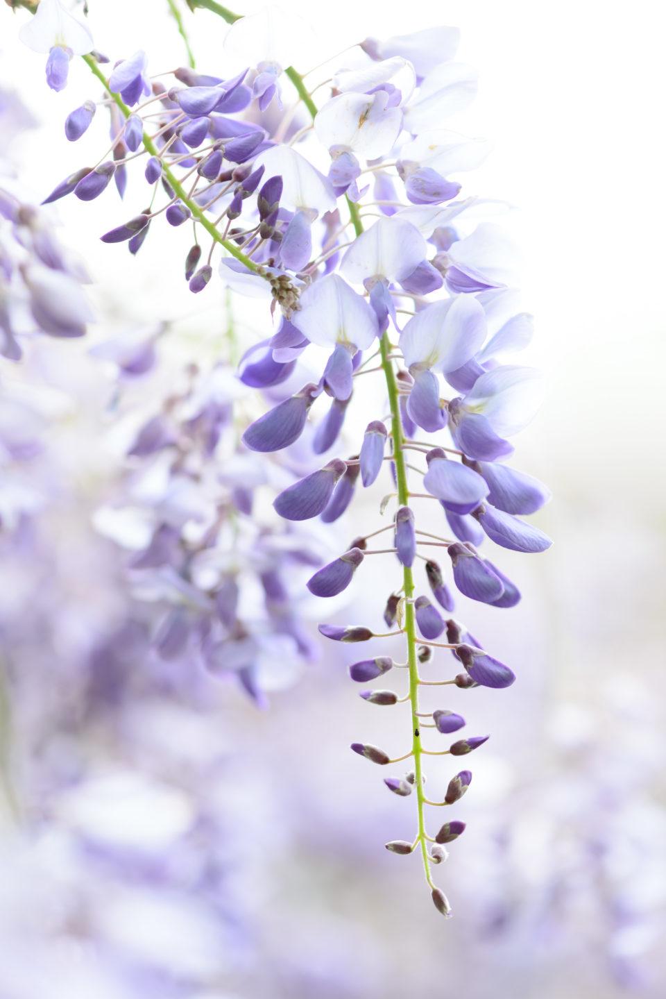 Lucille_Galleli-Floral _2020_2473