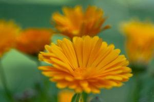 Lucille_Galleli-Floral _2020_3065