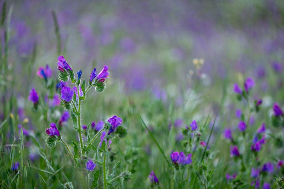 Lucille_Galleli-Floral _2020_3403