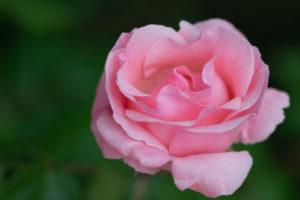 Lucille_Galleli-Floral _2020_4325