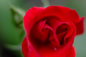 Lucille_Galleli-Floral _2020_4344