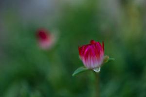 Lucille_Galleli-Floral _2020_4421