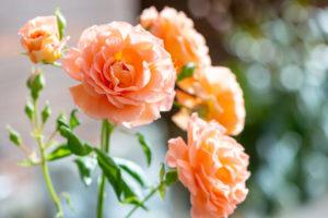 Lucille_Galleli-Floral _2020_4912