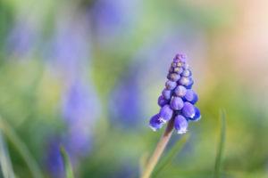 Lucille_Galleli-Floral _2020_7100