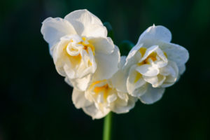 Lucille_Galleli-Floral _2020_7867