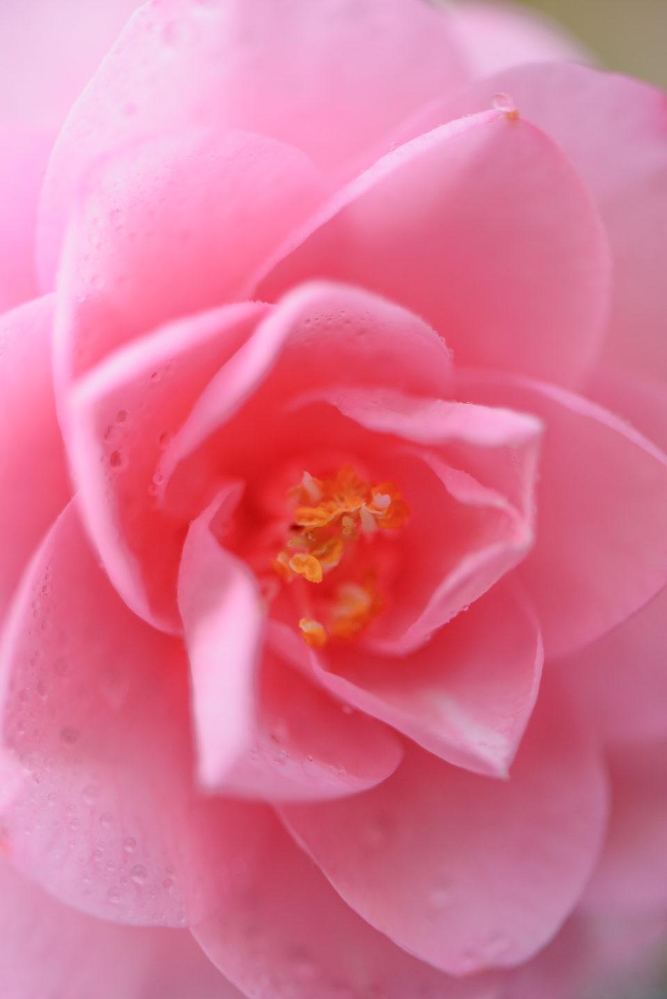 Lucille_Galleli-Floral _2020_8034
