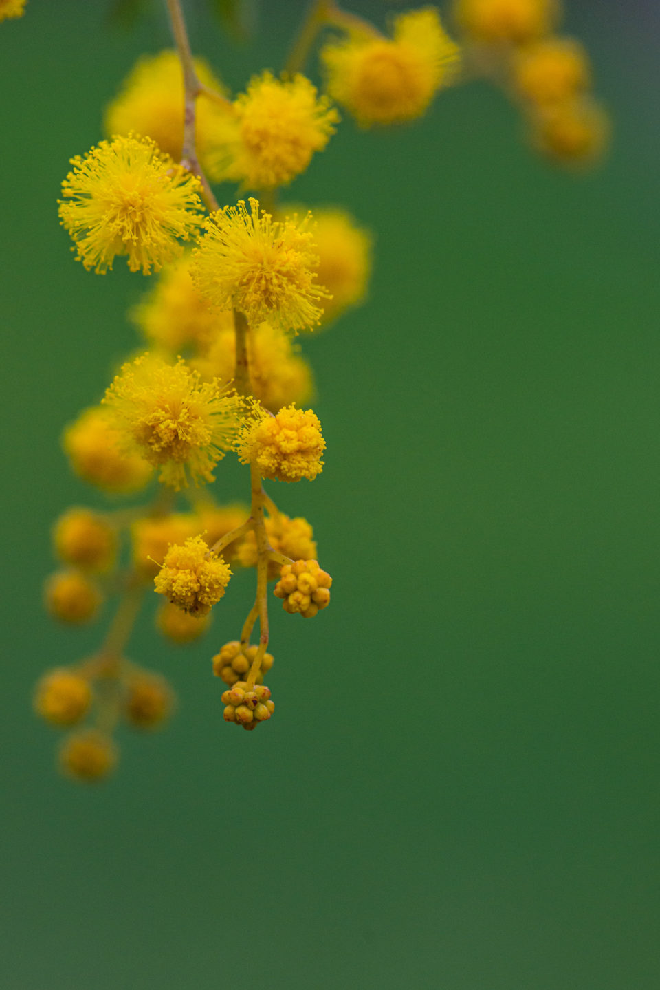 Lucille_Galleli-Floral _2020_8327