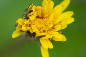 Lucille_Galleli-Floral _2020_8980-2